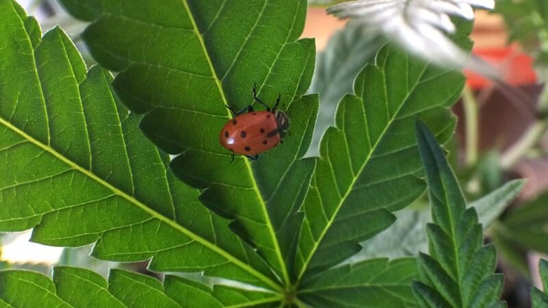 Lady Bug Bend, Oregon